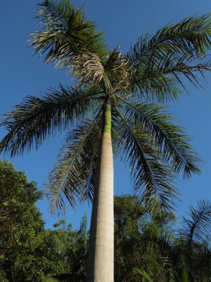 Guyane 15-2012