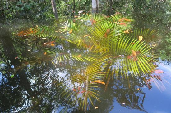 Manaus 16