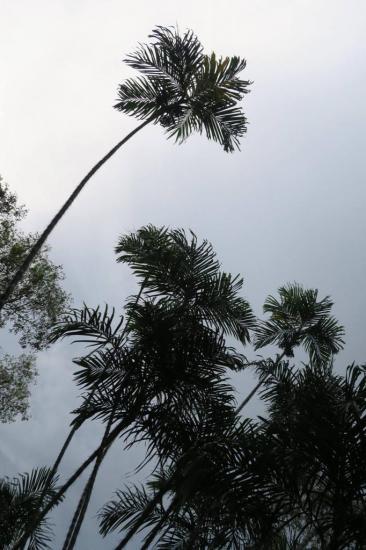 Manaus 18