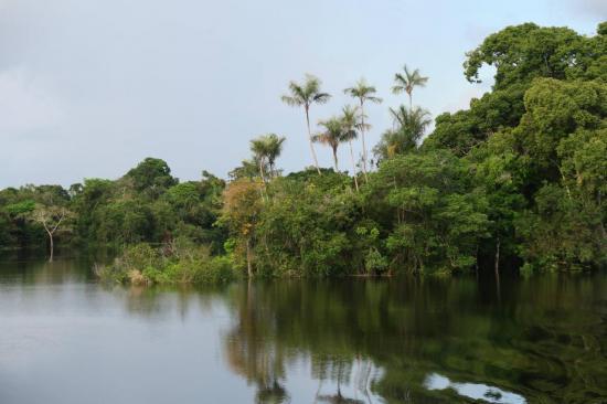 Manaus 19