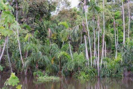 Manaus 28