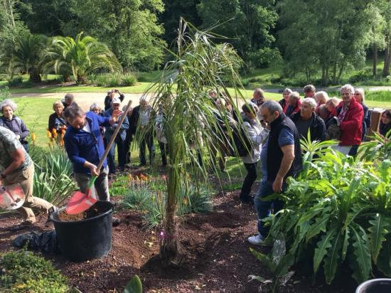 Plantation Palmier Jardin Bo 3