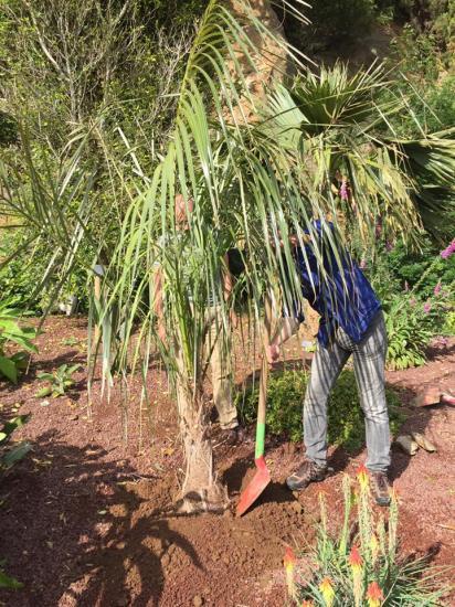 Plantation Palmier Jardin Bo 4