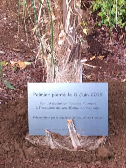 Plantation Palmier Jardin Bo 6