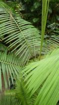 dans-la-serre-amazonienne-de-montpellier-ag-2013.jpg