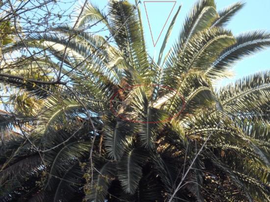 jeunes-feuilles-manquantes-et-palmes-seches-fdp.jpg