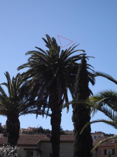 palmes-brisees-ou-manquantes-fdp.jpg