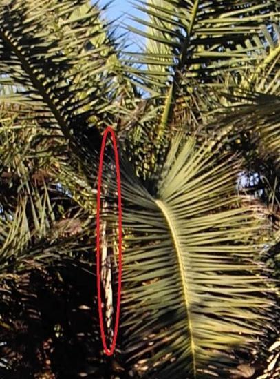 palmes-seches-en-partie-superieure-fdp.jpg
