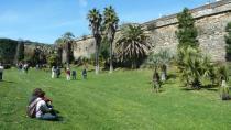 palmiers-de-la-citadelle-ag-2013.jpg