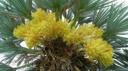 roussillon-2012-floraison-magique-du-33nax.jpg